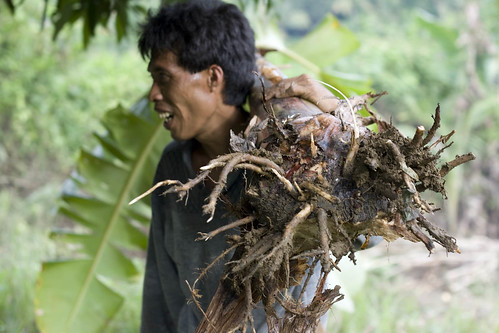 Cebu man carrying a tree root on his shoulder  Buhay Pinoy Philippines Filipino Pilipino  people pictures photos life Philippinen