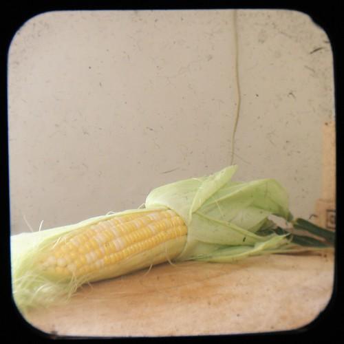 Corn Indoors