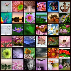 68th Turquoise's mosaic - September 15th, 2008 (Turquoise Bleue) Tags: friends colors promotion fdsflickrtoys flickr mosaic turquoise photographers september patchwork 2008 septembre artistes artiste photographe promote turquoisebleue turquoisesmosaic