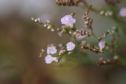 Flores en las salinas