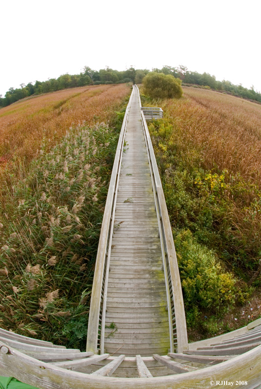 Marsh trail observation tower - Rondeau Provincial Park