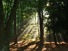 Follow the Light (algo) Tags: trees light england forest photography topf50 topv555 bravo shadows topv1111 topv222 rays algo topf100 sunbeams 100f naturesfinest chilternhills chilternforest 50f outstandingshots outstandingshot 200850plusfaves explore04 primevalforestgroups pfbeams