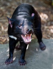 Australia Zoo (C) 2008