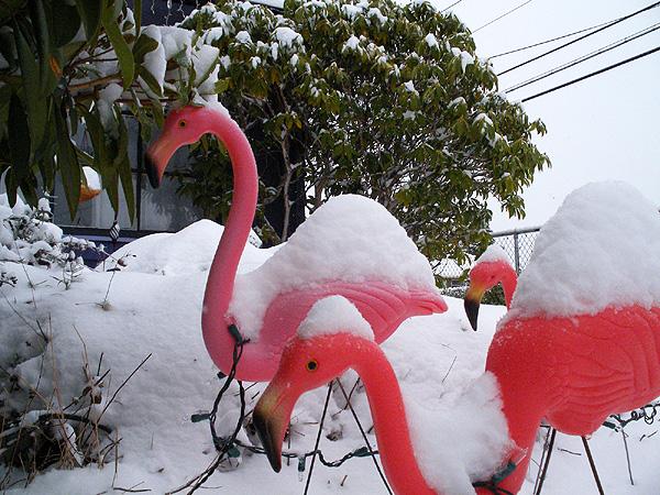 snowy flamingos