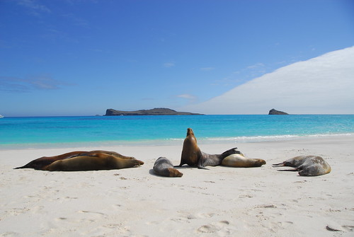 Sealions on Espanola Island