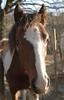 Fohlen12-08--9404 (clickraa) Tags: horses pferde foal fohlen