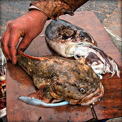 Oualidia, catch of the day (Ametxa) Tags: africa morocco maroc marruecos oualidia