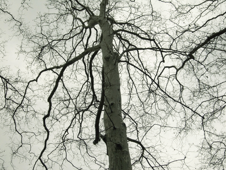 another tree