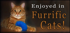 Furrific Cats Comment Code