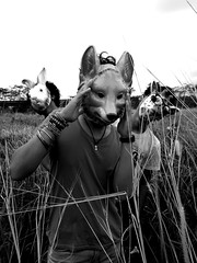 () Tags: wild rabbit field grass animals singapore experimental wildlife band fox indie local conceptual wayfarer girrafe fareez haqim amarul rejeks