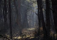 bos (hoogmoet) Tags: trees sun forest bomen shadows beam rays unicorn bos
