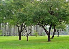 ~ Green Grass... ~ (Leonardo Martins) Tags: brazil riodejaneiro searchthebest naturesfinest abigfave anawesomeshot panasoniclumixfz18