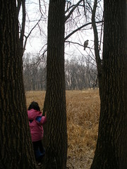 Olivia Looking at Hawk in Tree