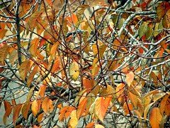 as the leaves turn (futtoom.) Tags: autumn fall leaves branches autumnleaves fallfoliage takenthroughawindow
