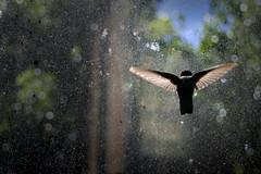 Tranquilo, ya estaras ah (ifoto.cl) Tags: chile canon rebel xt photos ave fotos navarro pajaro ignacio colibri osvaldo picaflor thok 2880 medel thokrates tamografia