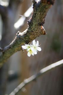 La pequeña primavera