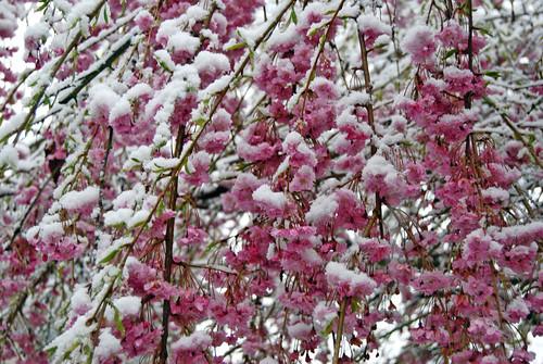 Pink Flowers Snow