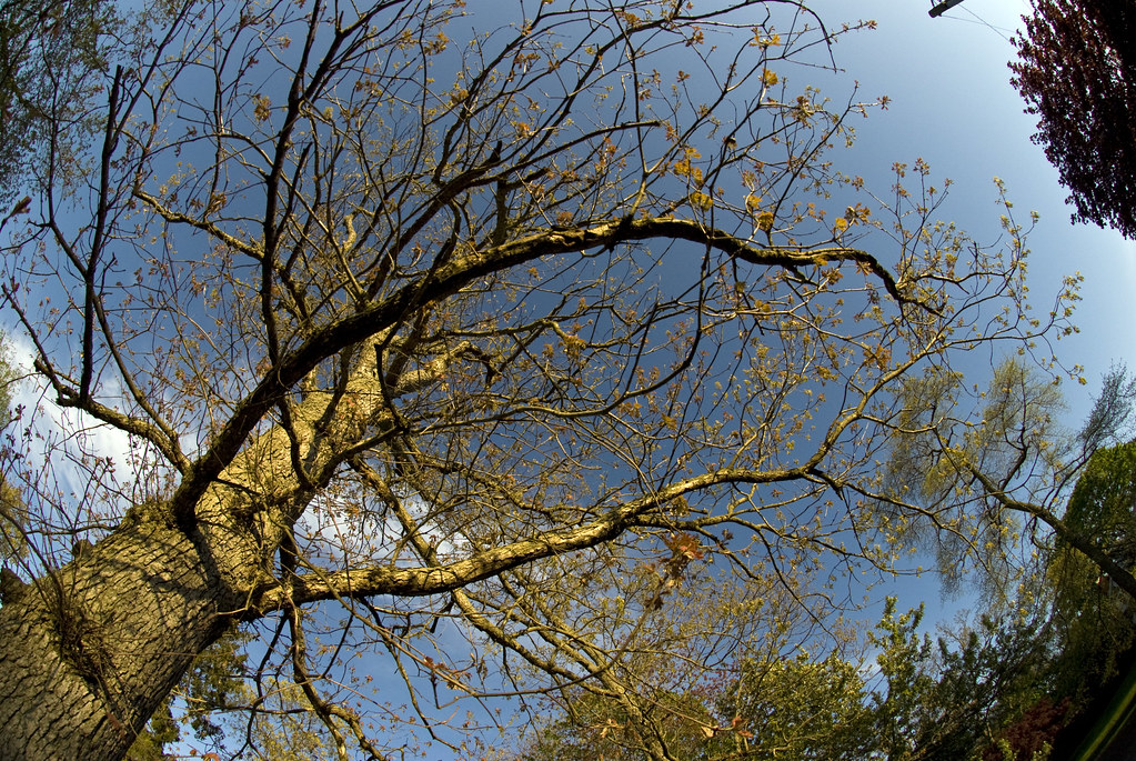 tree fisheye