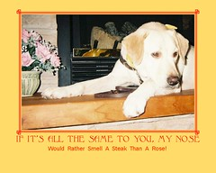 Yeah, Yeah, Smell the Roses (skoozot) Tags: dog poster lab labrador yellowlab humor servicedog flickrtoys