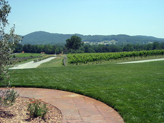 vineyard view at raffaldini winery