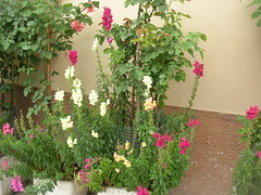 be'fiori la c'ha la signora (stefaniafei) Tags: fiori umbria norcia sibillini