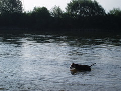 Ork na popodnevnom kupanju... (.stela.) Tags: dog animal beloved