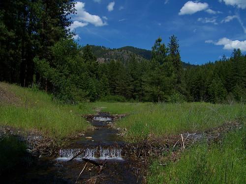Patrick's Creek