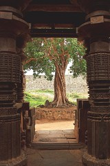 Banyan Tree Framed with the Temple Door (Tilak Haria) Tags: door india tree green temple frame maharashtra carvings banyantree kolhapur sangli khidrapur carvedpillars pratibimbsangli shiroli kopeshwartemple