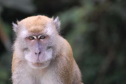 "Monkey - ""Hmm..."""