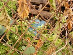 Blue Skid (smiley518) Tags: urban wisconsin milwaukee 2008