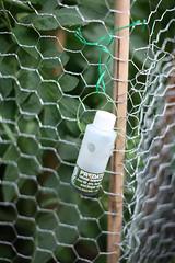 pee gardening myhouse urine myeverydaylife smellsbad stainsyourhands foxurine predatorurinedispenser hawbakersredfoxurine drivesyourdognuts