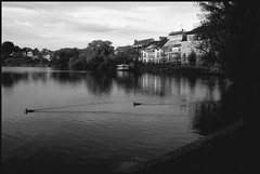 More from Hillerød without the colours (Kirsten M Lentoft) Tags: houses bw lake water buildings denmark boat ducks firstquality hillerød castlelake momse2600 kisssssssses kirstenmlentoft