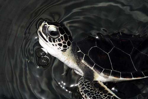 turtle 16