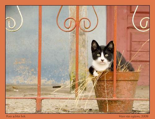 Poes achter hek