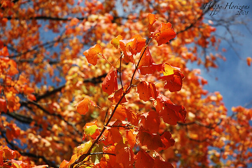 O ' Fall..
