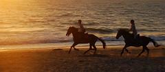 (Q u e n t i n ) Tags: ocean sunset horses mer de soleil boat sand seagull coucher sable wave bretagne britanny bateau vague dike digue goland cheveaux galop quimiac quentinfichet