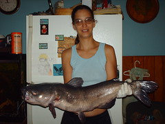 15 pound catfish