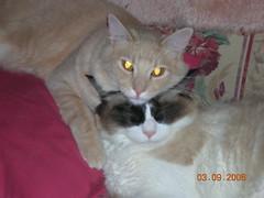 Jake & Mia (disney5367) Tags: jake mia bestofcats catmoments boc1108