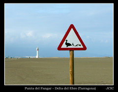 Punta del Fangar - Delta del Ebro (Tarragona) (jciczgz) Tags: espaa lighthouse sign ro warning river faro duck spain traffic ducks delta pato catalunya ebro attention fluss trafficsign espagne trafficsigns canard catalua tarragona spanien patos canards seales seal achtung cuidado ebre atencin cannard deltadelebro sealesdetrfico fotografiasjciczgz fluve