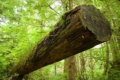 obelisk (dolanh) Tags: oregoncoast oswaldweststatepark shortsandsbeach