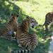 Botanical Gardens and Zoo 103