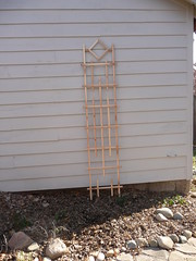 Finished Trellis