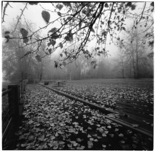 Pinhole Foggy Morning
