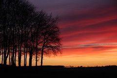Sunset at Smiddy Hill 6 xii 08 (Ron Dough) Tags: trees sunset canon scotland angus 40d eos40d smiddyhill