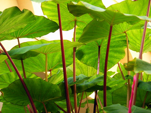 Red Stems