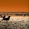 Warm feelings (LifeAsIPictured) Tags: sunset seagulls ny beach bobdylan adele aplusphoto countryfeelings makeyoufeelmylove lifeasipictureit