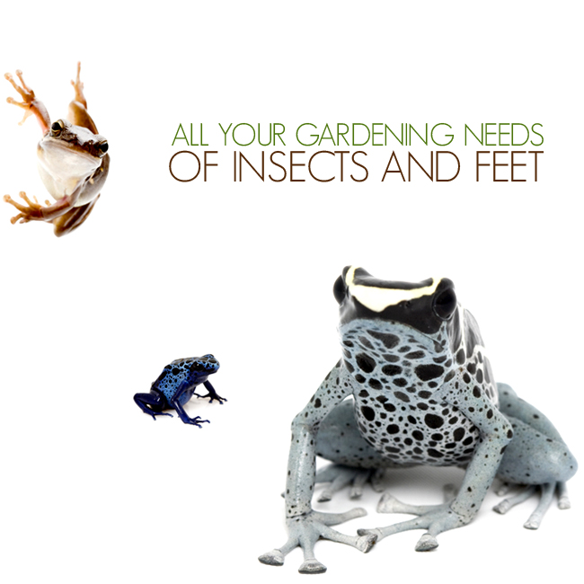 all your gardening needs: of insects and feet