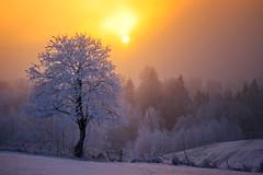 Minus 10 (degrees Celsius) (Krogen) Tags: winter norway landscape norge vinter december norwegen noruega scandinavia akershus desember gardermoen romerike krogen landskap noorwegen noreg ullensaker skandinavia olympuse3