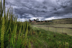 Sheep Country (andrewfuller62) Tags: colour rural landscape sheep australia tasmania hdr grazing midlands sigma1020mm photographyrocks bluribbonwinner nikond300 hdraward