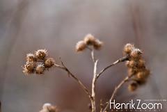 Forzen (Lasse A.) Tags: winter sunset cold suomi finland frozen vinter frost turku bo talvi ilta auringonlasku åbo jäätynyt tuku kylmä kvll kylm
